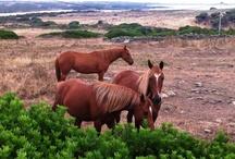 Cavalli / Servizio fotografico dei miei cavallini