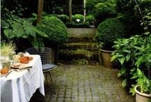 Gardening / Ideas for my small urban garden... / by Lily Ramirez-Foran