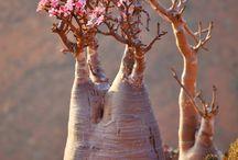 květiny a bonsaje