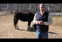 2013 Healing with Horse Telesummit / Horse healers, coaches,consultants and leaders unite for a telesummit series of interviews that show how horses help humans connect, become better human beings and make a living helping others.  Brian Reid recaps the intelligent interviews with these passionate industry leaders.