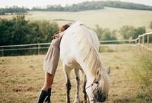 Horses / by Melissa Morris