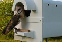 | OWL HOUSE |