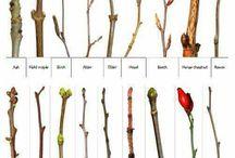 Plantekendskab