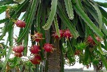 Kaktuszok..