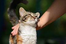 mimos a los Gatos