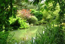 Giardino dei sogni... / Progettazione giardini moderni