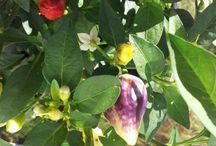 plants'n colours