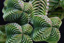pleated plants