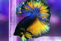 AH - TERMÉSZET - ÁLLATOK / minden földre teremtett szépségről, érdekességről