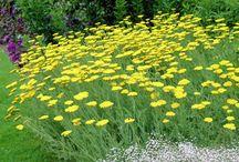 Devon Hillside / Hillside Planting