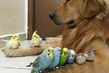 Psy i ptaki