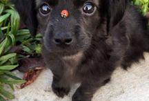 cute zvířátka