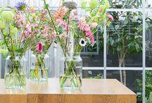 Decoratie / Huis, bloemen