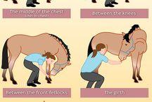Oefenen met pony/paard