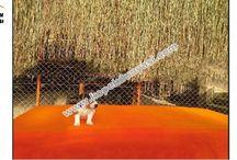 Jack Russel Terrier / Jack Russel Terrier