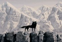 Movies / by Tanja Duttenhofer