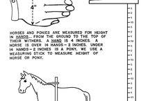 pony camp work books