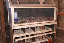 hønsehold