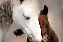 Horses / by Amber Willmore