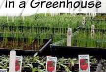 Garden + Green House