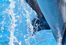 Yunuslar / En Sevdiğim deniz hayvanları❤️