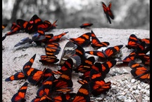mariposas / by Yolanda Colec