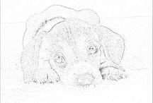 Kleuren Beagle / Kleur platen Beagle