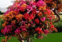 jardín / Diseño de jardín e información sobre plantas y flores.