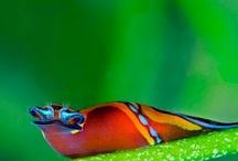 Nature Photos / by Ricardo Dalessandro