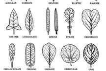 Tree Education Printables