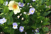 inthegarden / Heritage roses, sweet peas and gorgeous garden ideas.