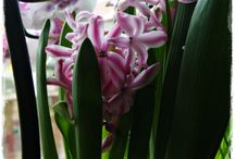 Kwiaty / moje kwiaty