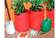 Ideen für Tomatenpflanzen