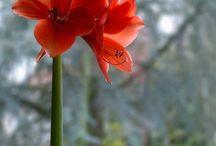 plantas florales de sol