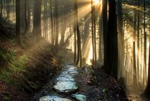 Light through trees / Light trees landscape vision