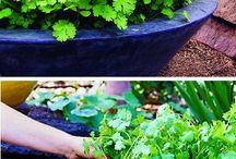 Kjøkkenhage og landscaping