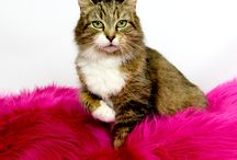 Adoptable Cats of AAR / Lots of beautiful, adoptable cats at AAR