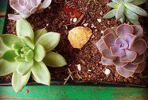 Criações SOMA / Vasos e Hortas que desenvolvemos >> somanatureza.com.br