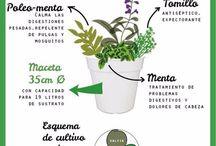 Plantitas y huerto