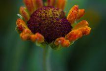 Photo: Vincent Dale / Soulful images by Vincent Dale -- Seelenvolle Fotografien von Vincent Dale | https://plus.google.com/+VincentDale/posts