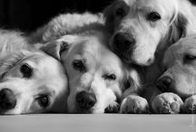 Animals I<3 them! / by Holly Soper-Creek