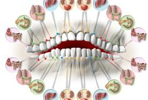 How teeth are connected to your body