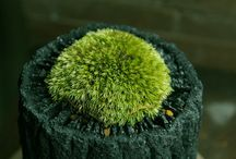 Moss / by Trees Group