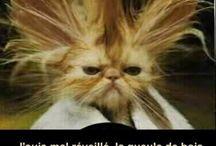 chat rigolo ou moche