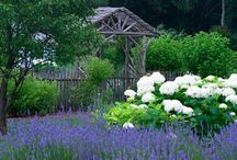 Glorious Gardens / by Dovecote Decor