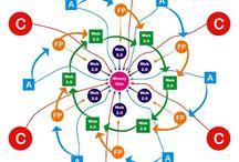 Link wheel seo / multilingual link wheel seo
