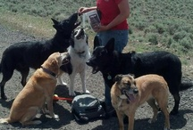 Happy Customers / Dogs that love Diggin Your Dog