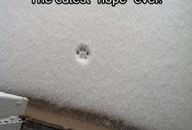 cats & snow