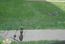 Les écureuils de mon quartier / Quelques écureuils dans mon quartier de Mercier-Ouest à Montréal.