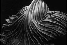 Edward Weston, Photographer